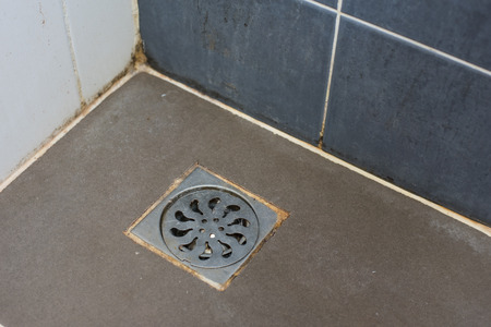 Sewer grate  with different sorts of mold (close-up shot) in the bathroom. Foto de archivo