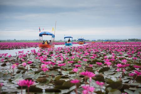 ウドーン タニ タイ - 12 月 5 日: ウドーンターニー (タイで目に見えない) の淡水湖でロータスの中でボートに乗って観光客。2014 年 12 月 5 日ウドンタ