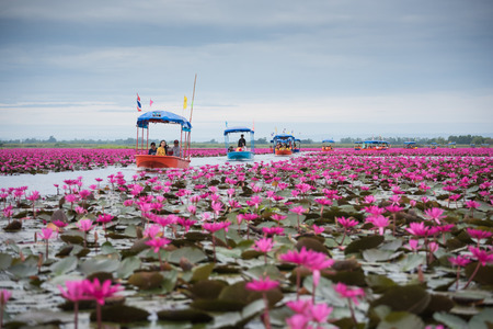 UDON THANI THAILAND - DECEMBER 5 : Tourists on the boat amongst lotus at freshwater lake in Udon Thani (unseen in Thailand). On Dec. 5, 2014 in Udon Thani, Thailand. Editorial
