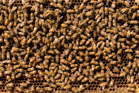 joint effort: Bees swarming on a honeycomb Stock Photo