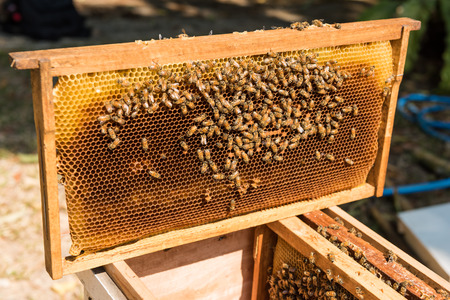 detai: Bees swarming on a honeycomb Stock Photo