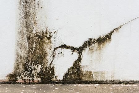 かびの生えた壁