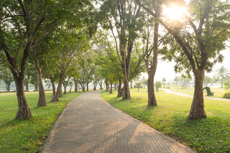 trails: Trees and walkway on green grass field in the park at morning.