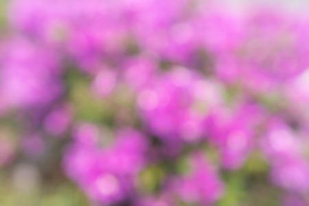 Photo from defocus blur at pink flower garden photo