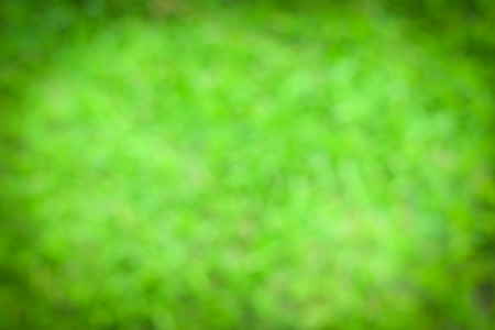 defocus: Photo from defocus blur at green grass in garden