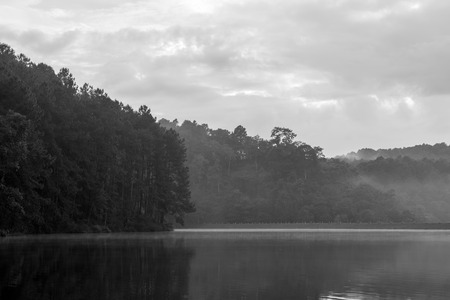 irradiate: Black and white, Reflection of pine tree in a lake