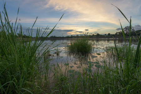 swamps: Scenic sunset in swamps