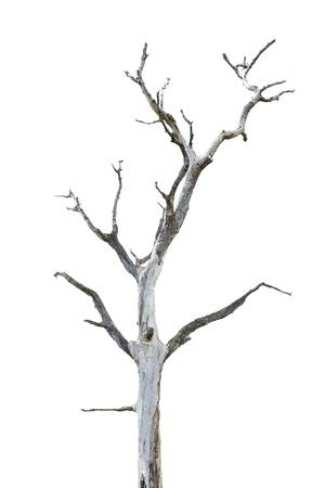 raices de plantas: Solo árbol viejo y muerto aisladas sobre fondo blanco