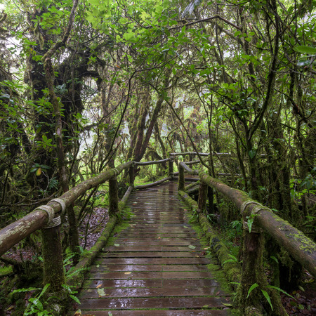 doi: Moss forest, passage in the primeval forest in Doi inthanon Chiang Mai, Thailand.