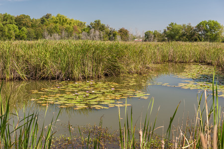 swamps: Scenic of swamps in national park
