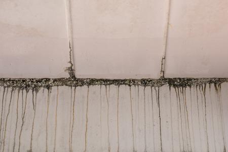mildewed: Mildewed walls