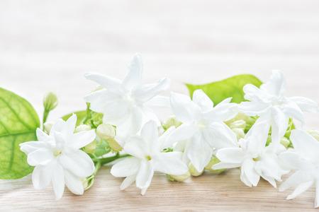 Jasmijn bloem Stockfoto