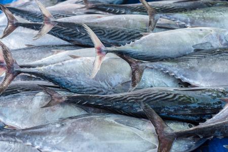 thunnus: fresh tuna Stock Photo