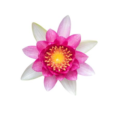 Lotus Blume Isoliert Auf Weißem Hintergrund. Lizenzfreie Fotos ...