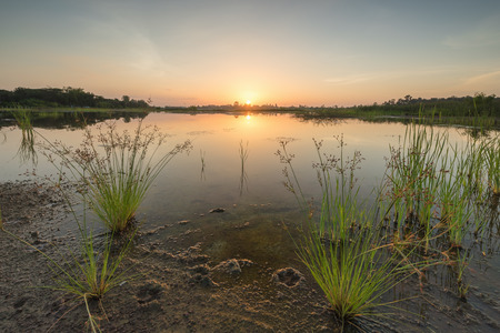 riverbank: Scenic of swamps in national park at sunset