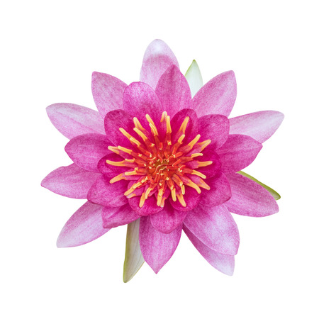 Lotus flower isolated on white background. This has clipping path.