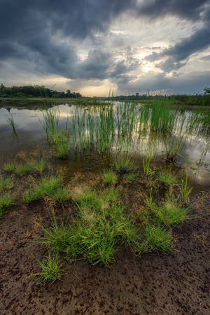 swamps: Scenic of swamps