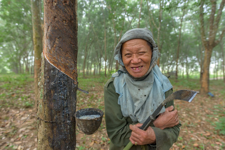 recoger: Old farmer smile in rubber plantation