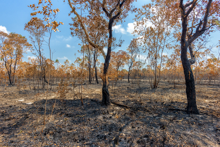 Rainforest cut and burned to plant crops Stock Photo