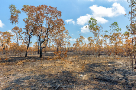 context: Rainforest cut and burned to plant crops Stock Photo