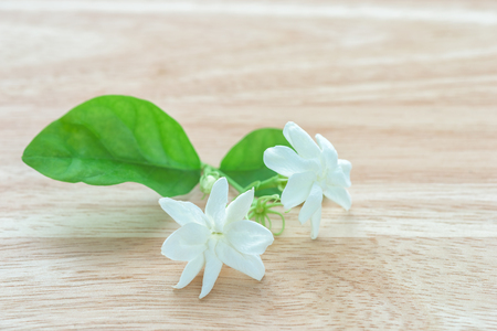 Close-up Jasmine flowers on a wood table Stock Photo