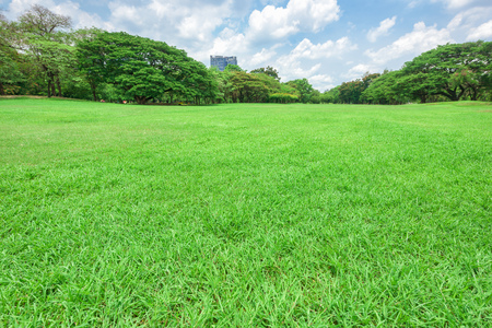 Beautiful landscape in park with green grass field. Stock Photo