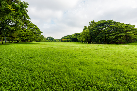 Green grass field in park at city center with business buildings.