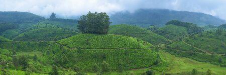 Panoramic beautiful tea plantations in hills near Munnar, Kerala, India. Zdjęcie Seryjne