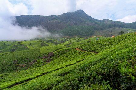 Beautiful tea plantations in hills near Munnar, Kerala, India.