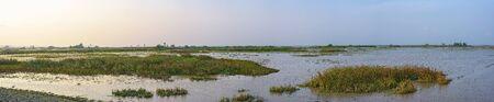 Panoramic scenic of swamps in national park Zdjęcie Seryjne