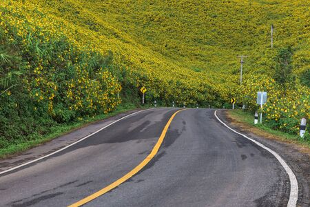 Empty asphalt road through Mexican sunflower flower field at Mae Hong Son Province, Thailand. Zdjęcie Seryjne