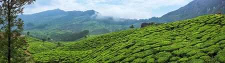 Panoramic beautiful tea plantations in hills near Munnar, Kerala, India. 写真素材