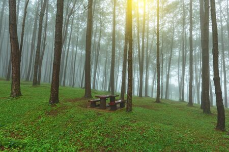 Chair and pine forest in fog at morning. 写真素材 - 132656212