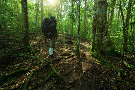 Man with hiking equipment walking in mountain forest, Thailand Standard-Bild