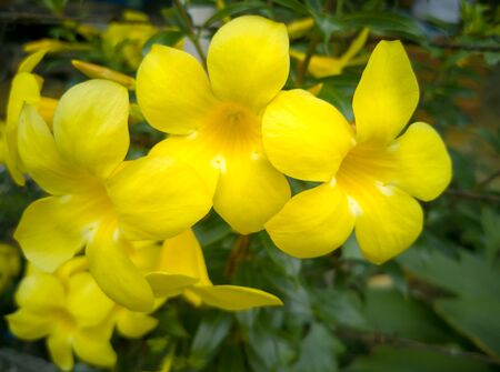 Find pictures of yellow flowers in the morning, in the form of illustrations and vectors in millions of Shutterstock collections around the world.