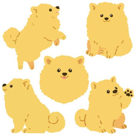 Set of flat colored Pomeranian illustrations 일러스트