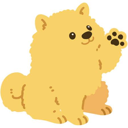 Flat colored Pomeranian sitting shaking hand