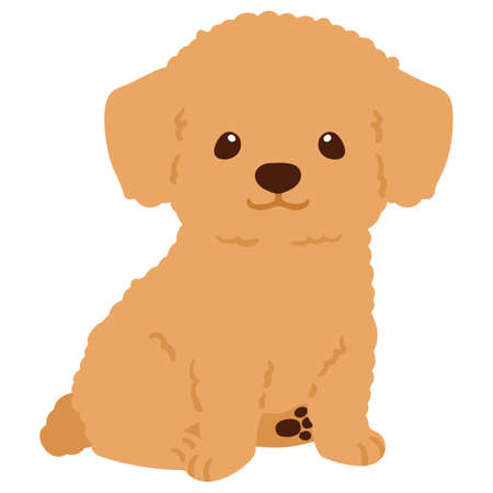 Flat colored Chihuahua Poodle Mix Puppy sitting in front view