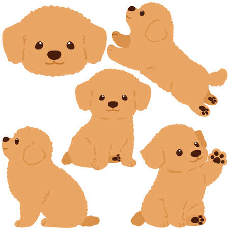 Flat colored Chihuahua Poodle Mix puppy illustrations set 向量圖像