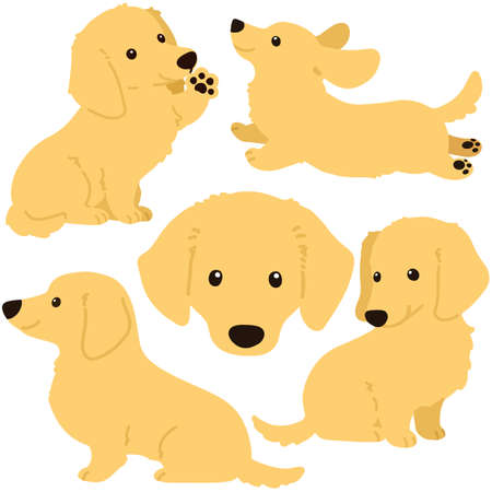 Set of flat colored cream miniature dachshund illustrations