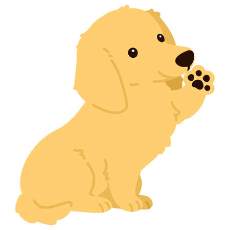 Flat colored golden Miniature Dachshund