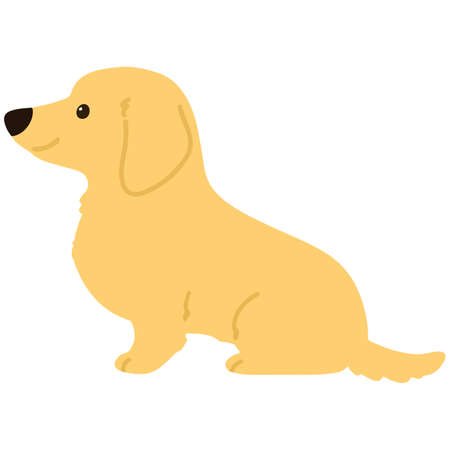 Flat colored cream miniature dachshund sitting side view 向量圖像