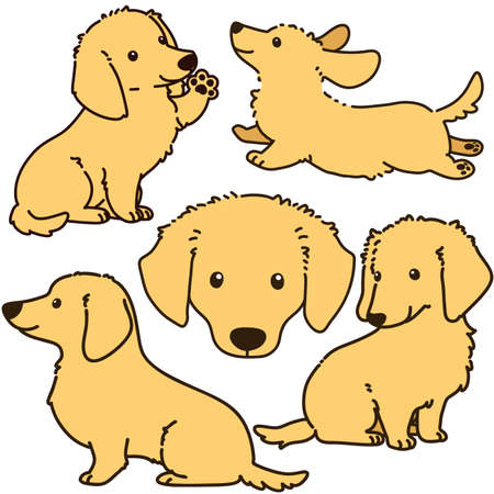 Set of outlined cream miniature dachshund illustrations