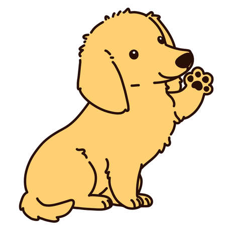 Outlined golden Miniature Dachshund puppy