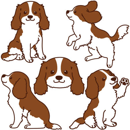 Set of outlined Brown Cavalier King Charles Spaniel illustrations