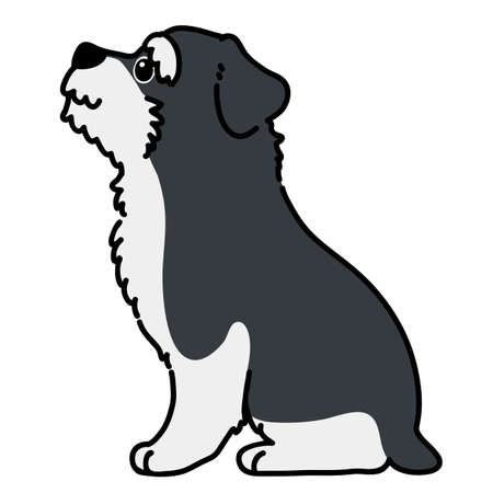Outlined Miniature Schnauzer sitting side view