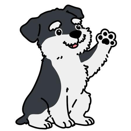 Miniature Schnauzer puppy sitting and waving hand