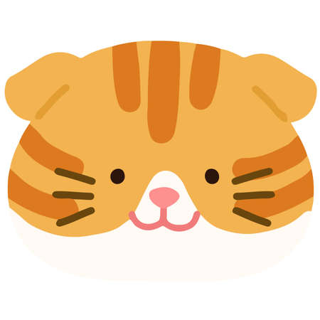 Flat colored adorable orange Scottish fold cat