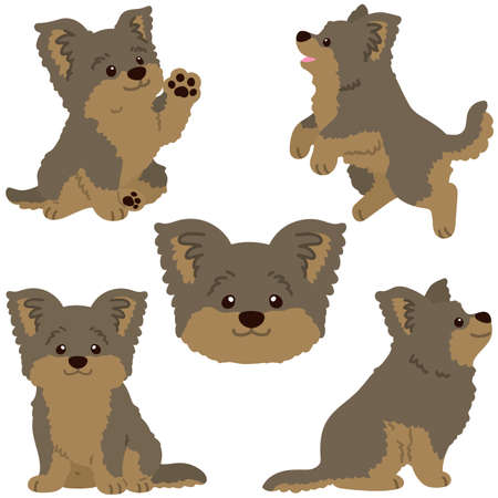 Set of flat colored simple and adorable Yorkshire Terrier illustrations Vektorové ilustrace