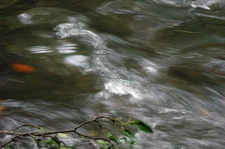 cours d eau: les feuilles d'automne dans un cours d'eau sur la petite rivi�re de la for�t
